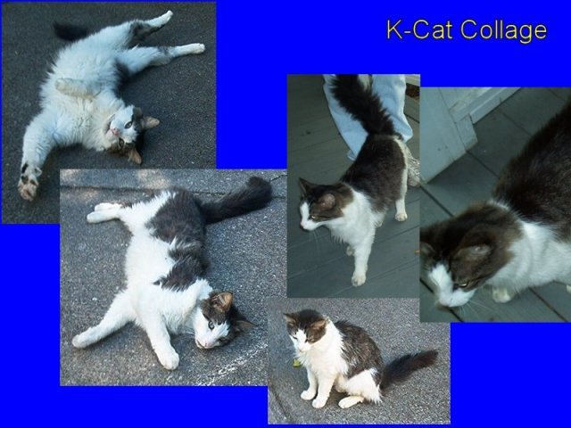 K-Cat Collage