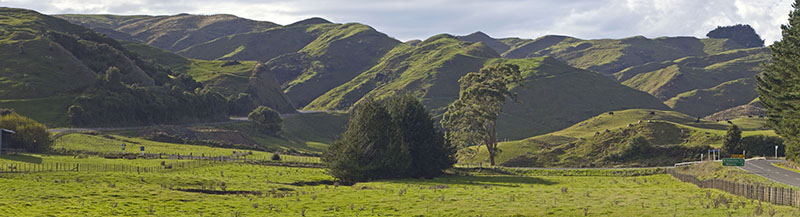 New Zealand Landscape (Rural Panoramic)
